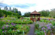 第一園芸、花の専門家が旅をプロデュース、話題の朝ドラ舞台を訪れる北海道の庭園めぐりなど3ツアー