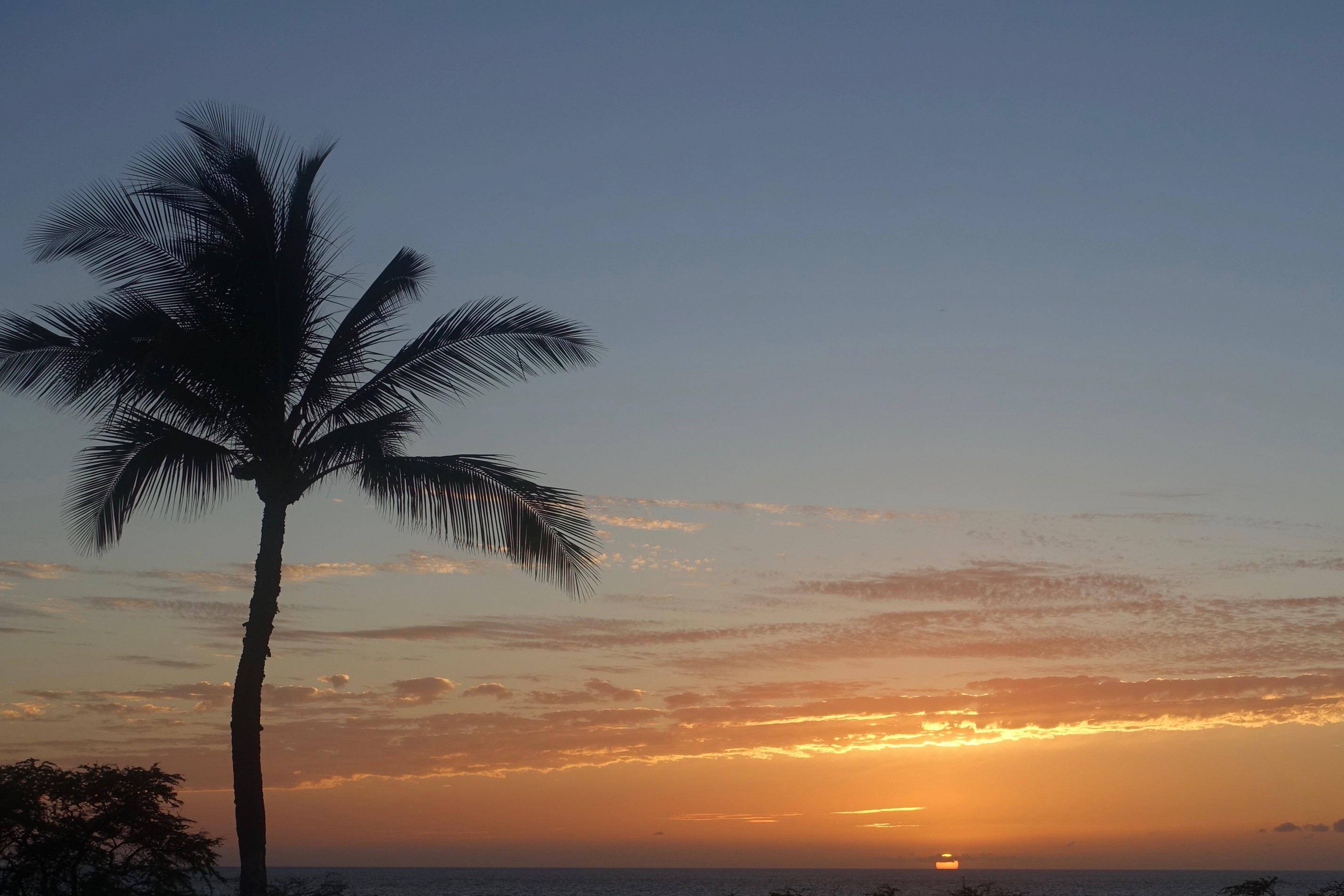 ハワイ島の今はどうなっているのか? キラウエア噴火から1年、現地に行って取材してきた