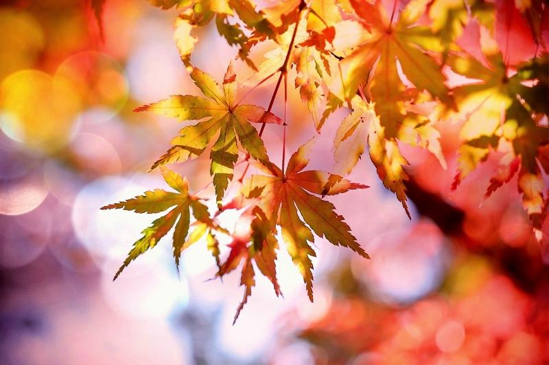 楽天トラベル「秋の国内旅行ランキング2019」、ツートップは四国から、香川県の女性ひとり旅が2.5倍に