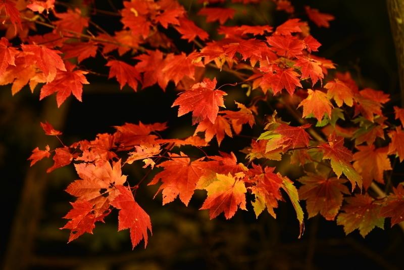 北海道の「日本一早い紅葉」でライトアップイベント、層雲峡温泉が夜の観光を創出で