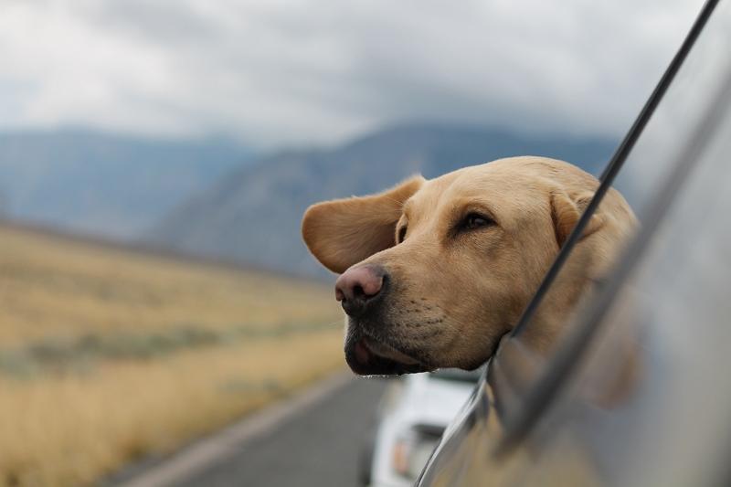 ペットの飼い主の3割が旅行は「連れていけるかどうかで行き先を選ぶ」、海外旅行は情報不足の声も