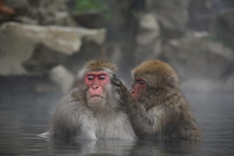 あこがれの温泉地ランキング2020、秋田・乳頭温泉郷が初の1位に、もう一度行ってみたいトップは14年連続で箱根