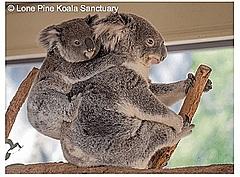 オーストラリア政府観光局、自宅で旅行気分になれるバーチャルツアーを発信、オペラハウスの館内見学やコアラ映像など