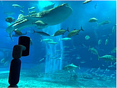 ANA、新型コロナ拡大防止で休校中の子供たちに、アバターで沖縄美ら海水族館の遠隔見学を提供
