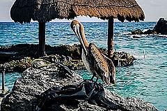 メキシコ、人気リゾートで観光客の受入れ再開、ホテル収容規模は3割まで、ゆっくり慎重なスタートに【外電】