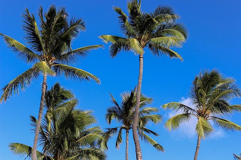 ハワイ州、入国者に義務付けの「健康管理アプリ」で完全登録を呼びかけ、オアフ島から隣島へは72時間前検査が必要