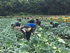 三井不動産、農業事業に本格参入、テクノロジー活用で高い生産性を実現へ、農業を基点に都市との関係人口創出も