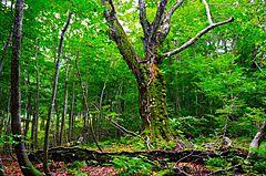 東京都・東京観光財団が「世界自然遺産観光」テーマでシンポジウム開催、知床や白神山地など世界自然遺産地域の先進事例紹介、10月13日に開催(PR)