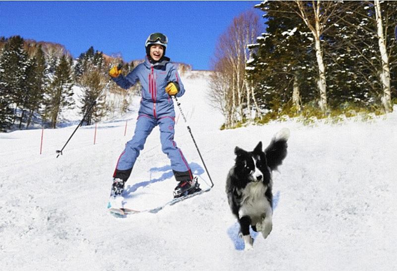 星野リゾート、北海道トマムのスキー場に「わんわんゲレンデ」、全長900mゲレンデを愛犬と滑走