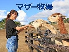 千葉県・マザー牧場に宿泊できるグランピング施設、ザファームのフランチャイズ第1号、2021年前半に開業へ