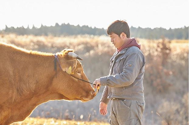 熊本県・黒川温泉、「あか牛ファンド」設立、食べることで草原を維持する資源循環、1食50円を寄付