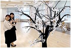 スマホのカメラで桜楽しむ「さくらAR」、ウェザーニューズ社が公開、バーチャル花見を提案