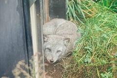 OMO7旭川、夏の旭山動物園を楽しむ講座開催、ホテル館内で動物の暑さ対策など紹介