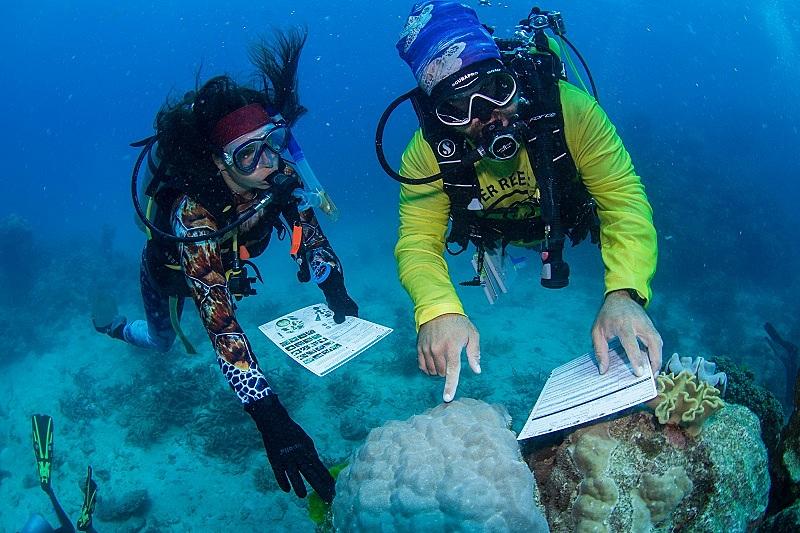 豪グレートバリアリーフ、ダイバー向けエコツアー開始、自然環境保護でサンゴの健康状態調査