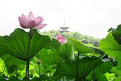 横浜の名勝庭園「三溪園」、早朝「観蓮会」を開催、朝7時開園で限定の特別朝食メニューを提供