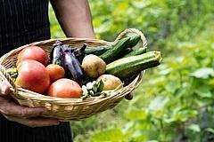 JAL、短期農業研修の参加者募集、交通費・宿泊費無料、地域移住や就農を促す農水省の事業で