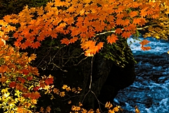 紅葉の見ごろ予想2021、定山渓、八甲田など今週末に見頃、京都は11月中旬から、今年は色づき鮮やか