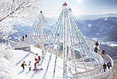 星野リゾート、リゾナーレトマムで「霧氷クリスマス」、高さ10mのツリーが登場